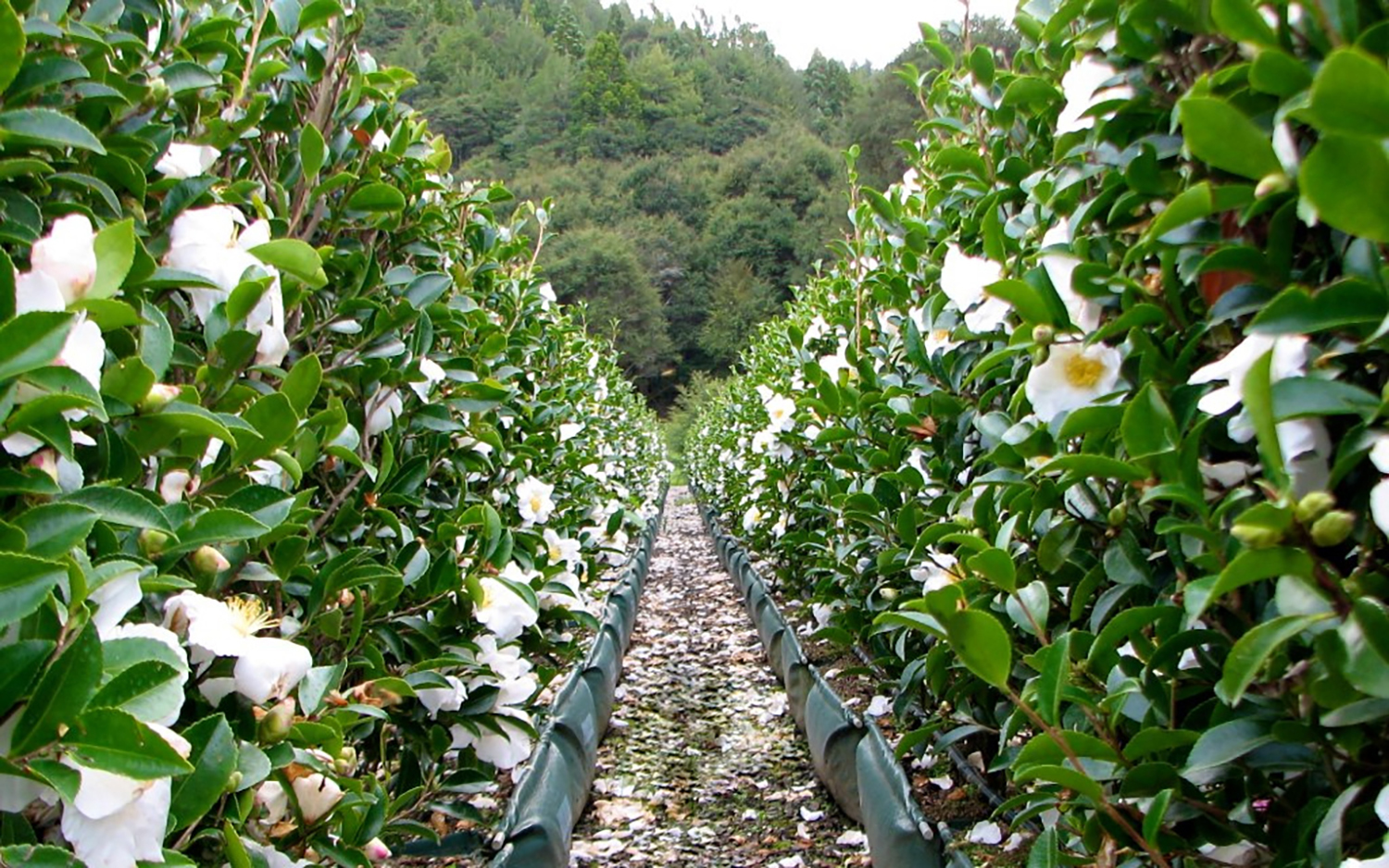 Hedging outside the box... - Hedge and Stone
